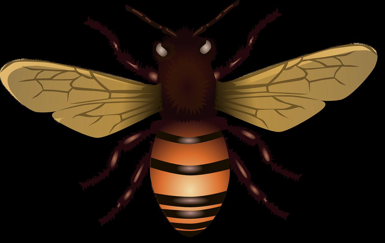 Иллюстрация с pixabay.com