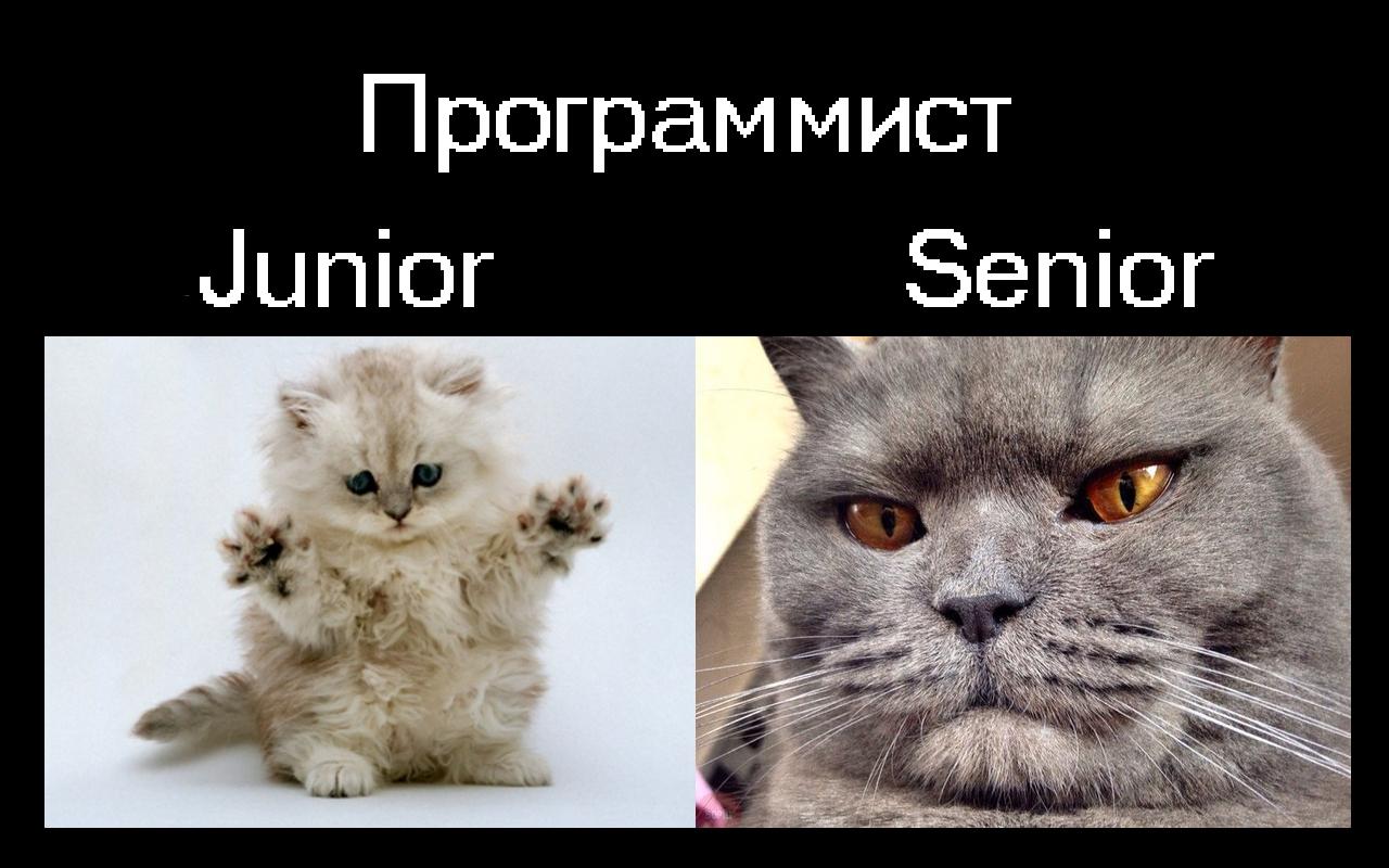 Программист-junior vs программист-senior