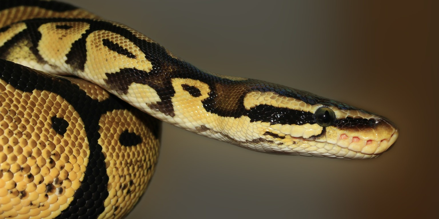 15 вопросов по Python