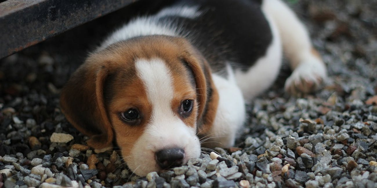Спаси щеночка – держи свои git-репозитории в чистоте